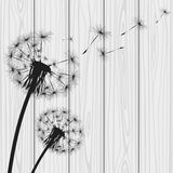 Silhouette with flying dandelion buds. Vector illustration Royalty Free Stock Photo