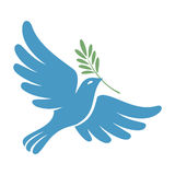 Silhouette of a flying dove with olive branch. White pigeon Royalty Free Stock Images