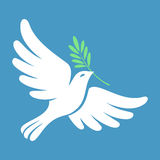 Silhouette of a flying dove with olive branch. White pigeon Royalty Free Stock Photos