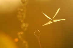 Silhouette of flying dragonfly at contrast lightening Stock Image