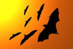 Silhouette of flying foxes Stock Image