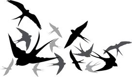 Silhouette flying swallows on a white background stock illustration