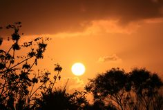 Silhouette of the foliage against dazzling setting sun on orange gold cloudy sky. Of Easter Island, Chile stock photography