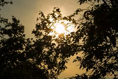Silhouette of foliage and trees on the background of the sun royalty free stock photos