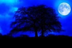 Silhouette foncée d'arbre avec une pleine lune rougeoyante Photographie stock