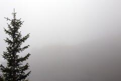 Silhouette foncée de pin sur le backgroung de brume de brouillard Image stock