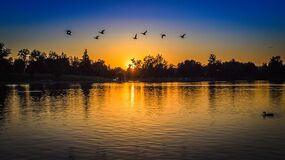 Silhouette of Forest With Birds Flying Above Body of Water during Sunset Stock Images