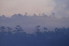 Silhouette of forest in dense fog Royalty Free Stock Photos