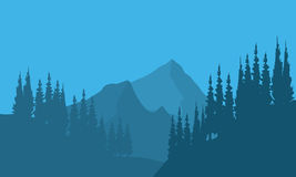 Silhouette of forest fir trees and mountain. With blue background Stock Image