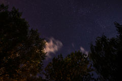 Silhouette of the forest in the night sky Stock Images