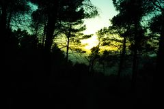Silhouette of a forest with trees at a spring sunset. Photo with blue and yellow tones Stock Photo