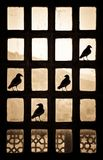 Silhouette of four birds making a tick sign on a patternlike window in India royalty free stock photo