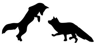 Silhouette of foxes Stock Image