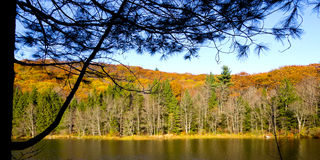 Silhouette framed autumn beauty shot. Of Benedict Pond in Beartown State Forest, Berkshire County, Massachusetts. Late afternoon royalty free stock image
