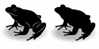 Silhouette of a frog , vector drawing. Isolated silhouette of a frog, black and white drawing, white background vector illustration