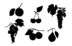 Silhouette of fruits Stock Photos