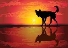 Silhouette of funny dog Royalty Free Stock Photo