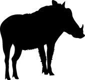 Silhouette of a funny moving standing warthog Stock Photography