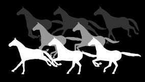 Silhouette galloping horses. Alpha channel. 4K. stock video footage