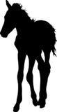 Silhouette of a garub desert wild horse kitten royalty free illustration