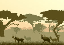 Silhouette of a gazelle Royalty Free Stock Image