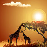 Silhouette of giraffe Stock Photography