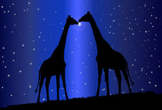Silhouette of giraffe Royalty Free Stock Image