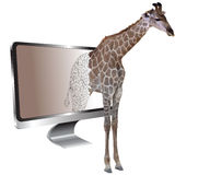 Silhouette of a giraffe coming out of the screen on white background Stock Photos