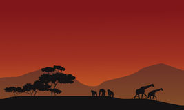 Silhouette of giraffe and gorilla Stock Photo