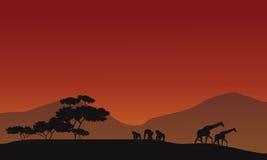 Silhouette of giraffe and gorilla Stock Photo