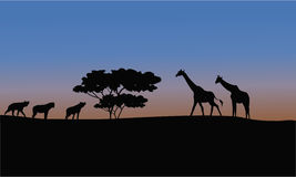 Silhouette of giraffe and puma Royalty Free Stock Photos