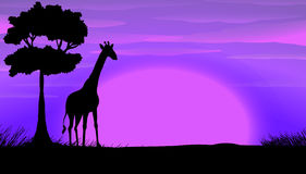 Silhouette of giraffe in safari Stock Image