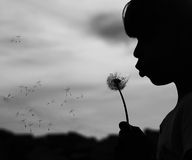 Silhouette of a girl with dandelions Royalty Free Stock Photo