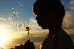 Silhouette of a girl with dandelions Stock Photo