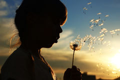 Silhouette of a girl with dandelions Royalty Free Stock Photography