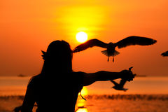 Silhouette of a girl feeding birds at the seacoast in twilight Royalty Free Stock Photos