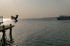 Silhouette of a girl jumping into the water at dawn.  Stock Image