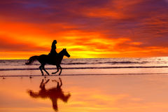 Silhouette of the girl skipping on a horse. On an ocean coast on a sunset Stock Images