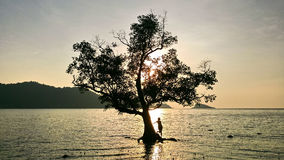 Silhouette of a girl at the tree. Silhouette of a girl who enjoys relaxing on an island of tropical nature, near a tree and landscapes colorful sunrise sky and Royalty Free Stock Photo