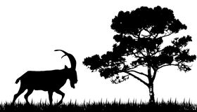 Silhouette of goat and tree Royalty Free Stock Image