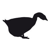 Silhouette goose Stock Photos