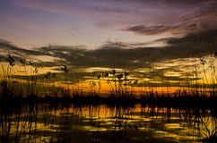 Silhouette grass. At lake during sunset Royalty Free Stock Image