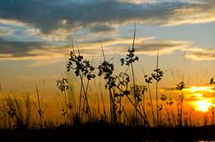 Silhouette grass Royalty Free Stock Photography
