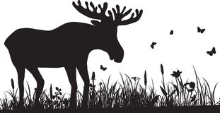 Silhouette of grass and deer Royalty Free Stock Photography