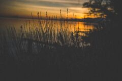 Silhouette of Grass Near Body of Water during Golden Hour Stock Photo