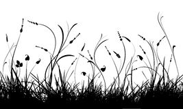 Silhouette of grass and plant Stock Photos