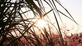 silhouette grass stock video footage