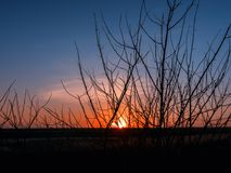 Silhouette of grass at sunset royalty free stock photo