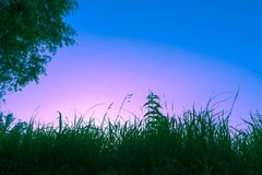 Silhouette of grass and tree against blue sky at sunrise Stock Photography
