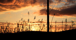 Silhouette of Grass Under Gray and White Clouds during Sunset Royalty Free Stock Photography